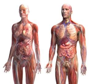 1362651703_anatomiya-cheloveka