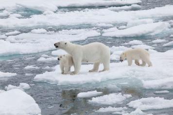 iklim-cesitleri-kutup-iklimi