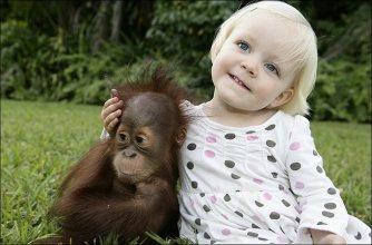 orangutan_1__682_672107a
