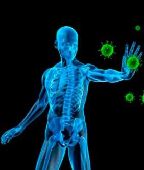 immun-sistemii